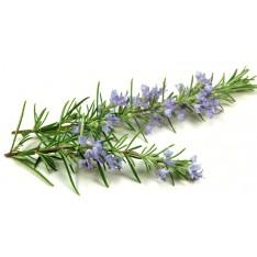 Fragrance d'huiles essentielles sauna - Romarin