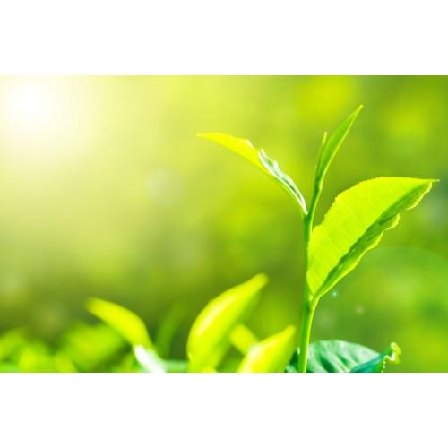 Emulsion d'huiles essentielles Euca / Menthe